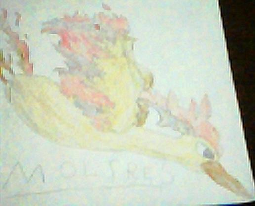 Moltres by Song_of_a_Phoenix