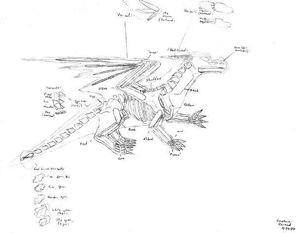 A Dragon Reference (2000) by Stratadrake