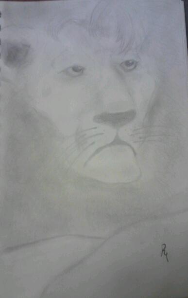 lion by smokeybandit1