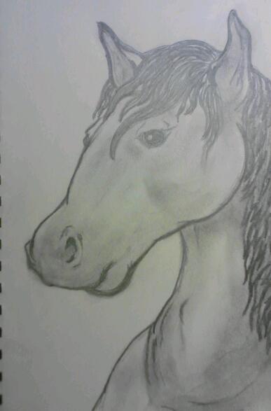 horse by smokeybandit1