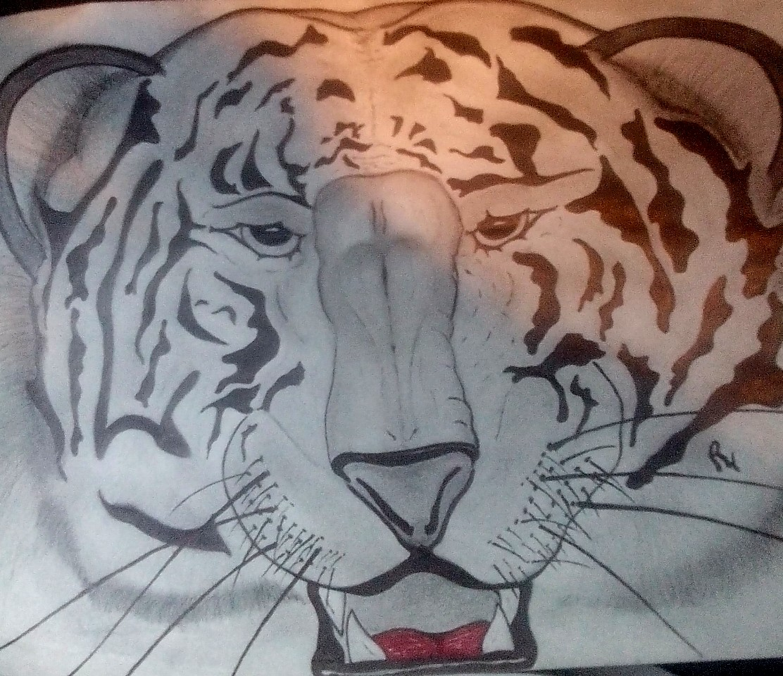 white tiger by smokeybandit1
