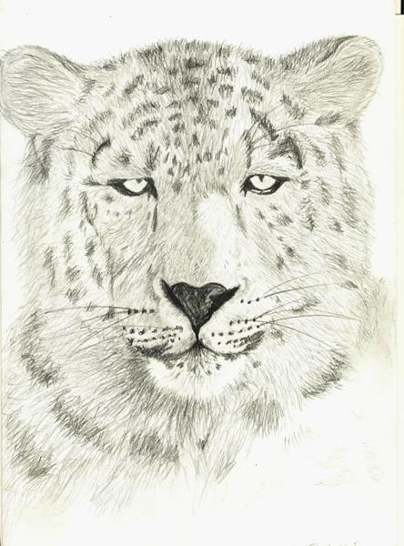 Leopard by sweethell