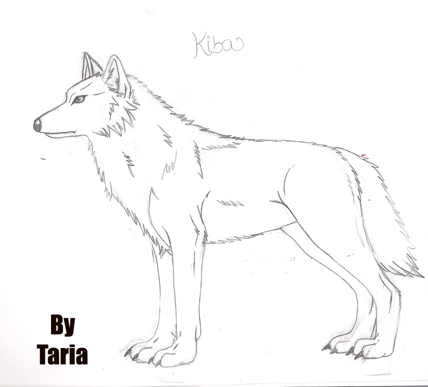 wolf rain coloring pages - photo#45
