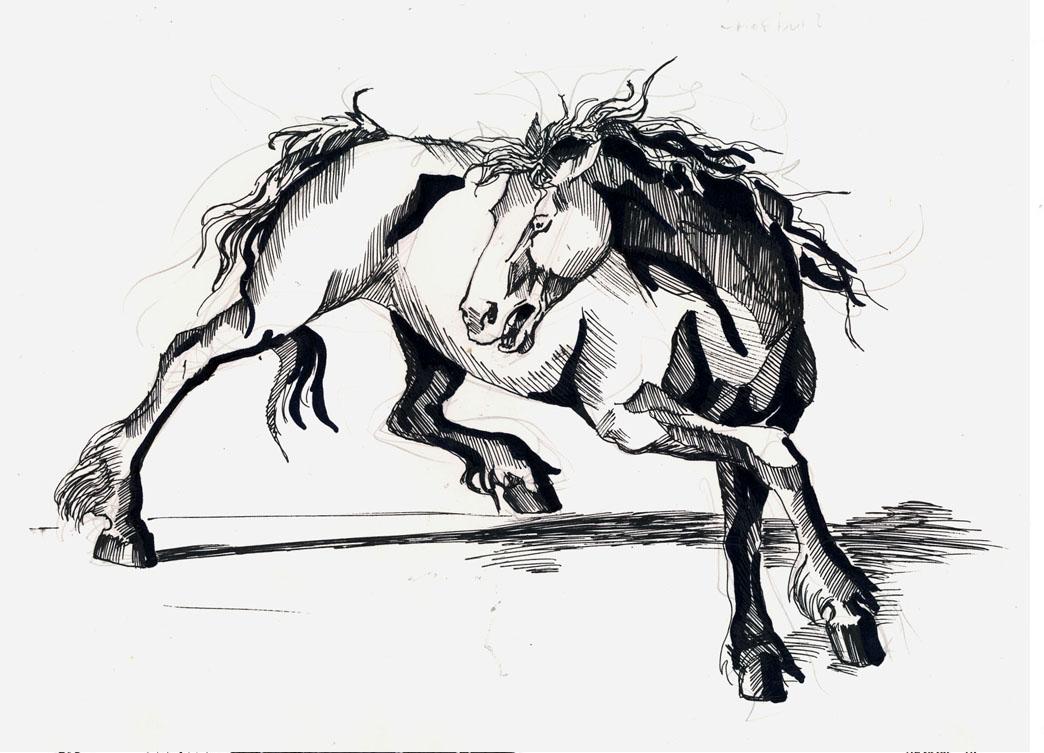 Crazy horse by Templado