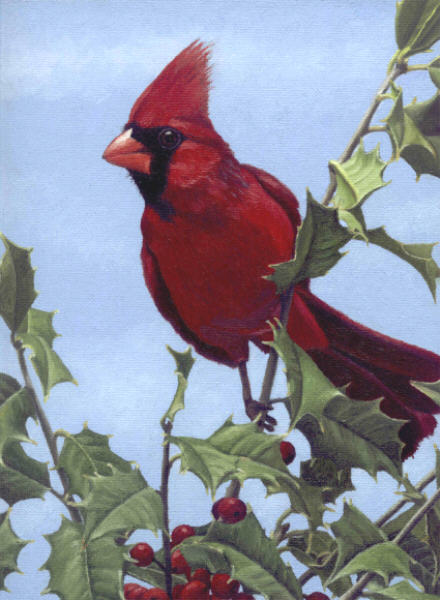 Cardinal in Holly by TerryXart