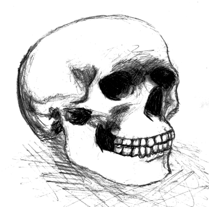 Human Skull by Tinkster