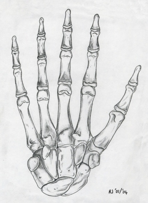 Hand Skeletal Structure by Triss