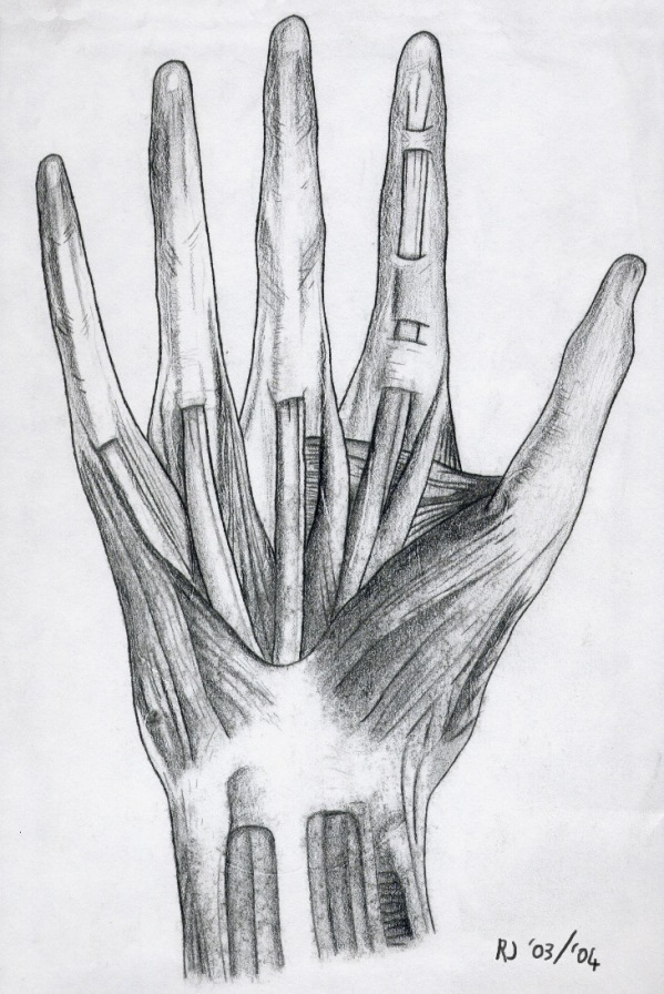 Hand Muscle Structure by Triss