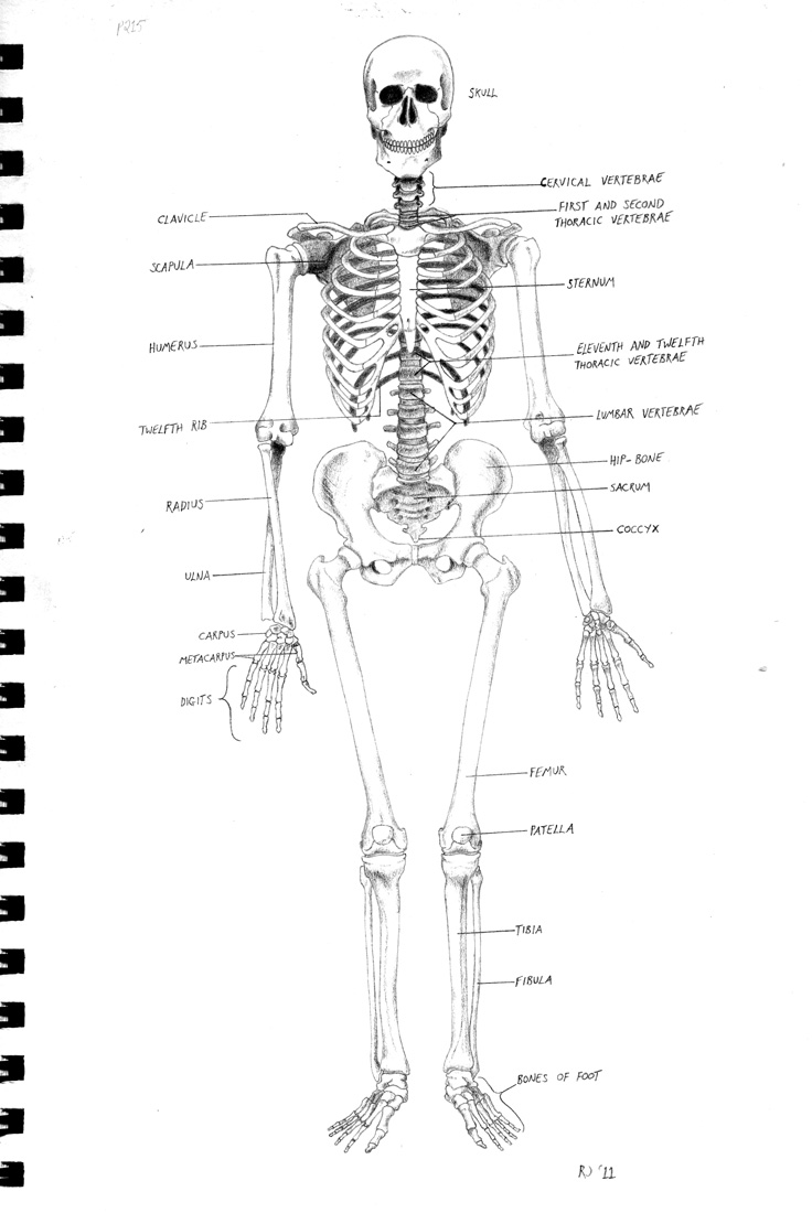 Diagram Of Skeleton With Labels K Kub 2018