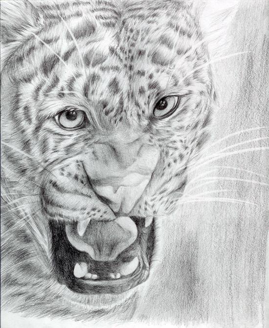 Leopard by TwilightDragon