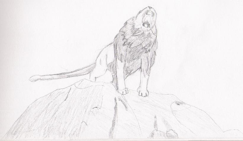aslan by trip