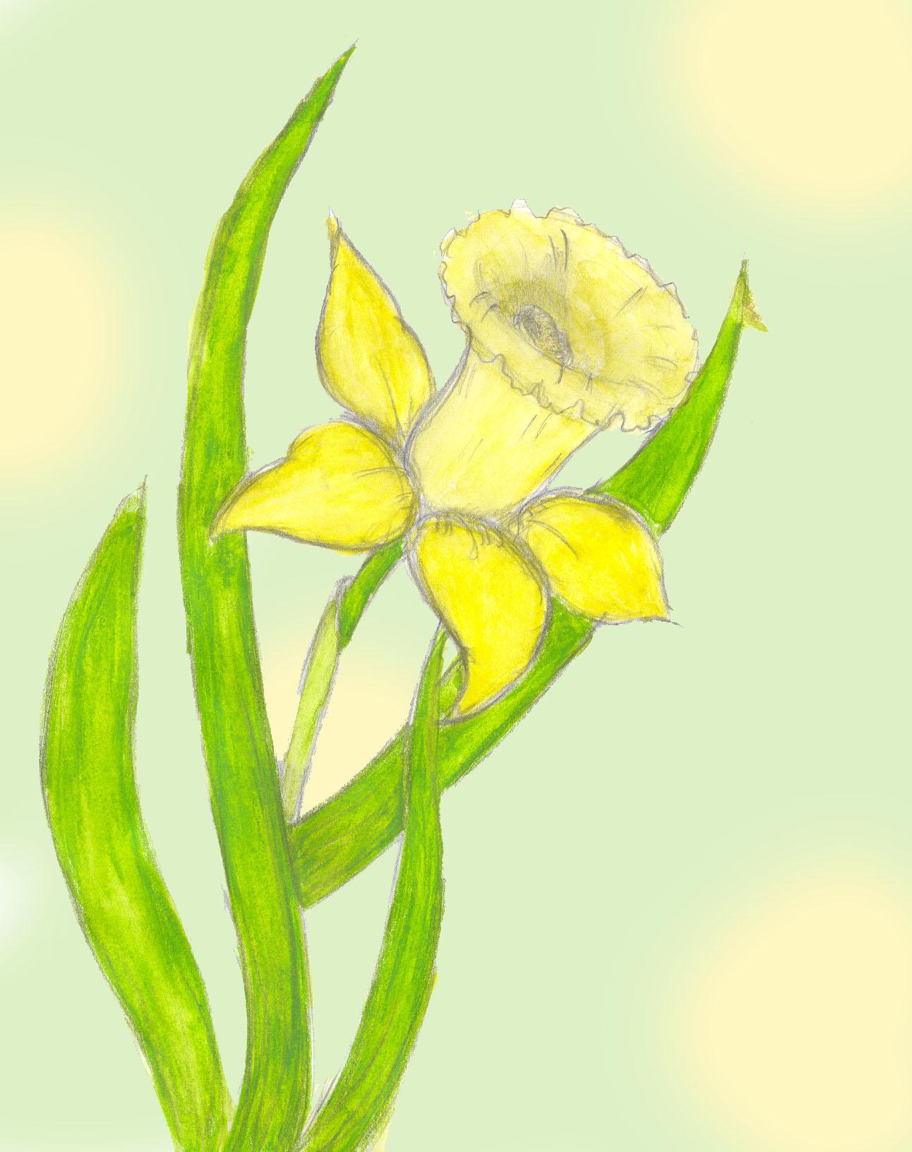 Daffodil by Yeslen-Muurlas