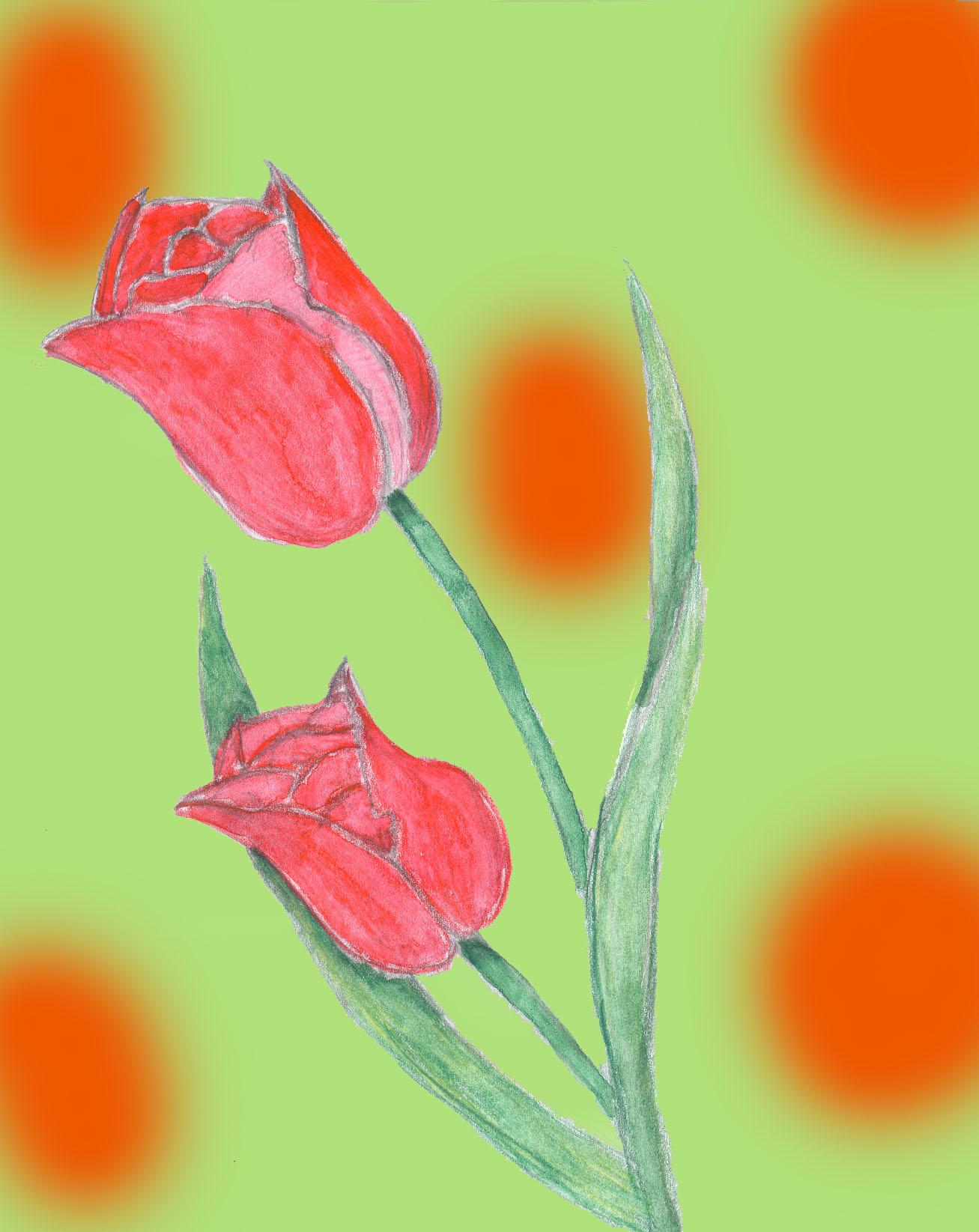 Tulpin by Yeslen-Muurlas