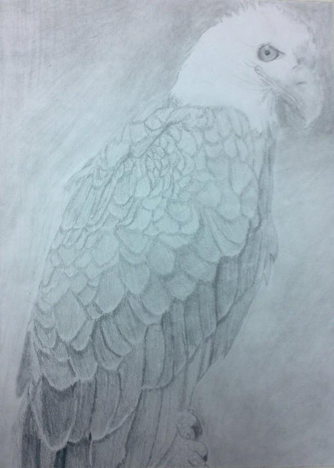 Eagle by yuai77